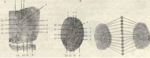Thời chưa có công nghệ nhận dạng, làm sao người xưa có thể dùng dấu điểm chỉ để phá án? - Ảnh 2.
