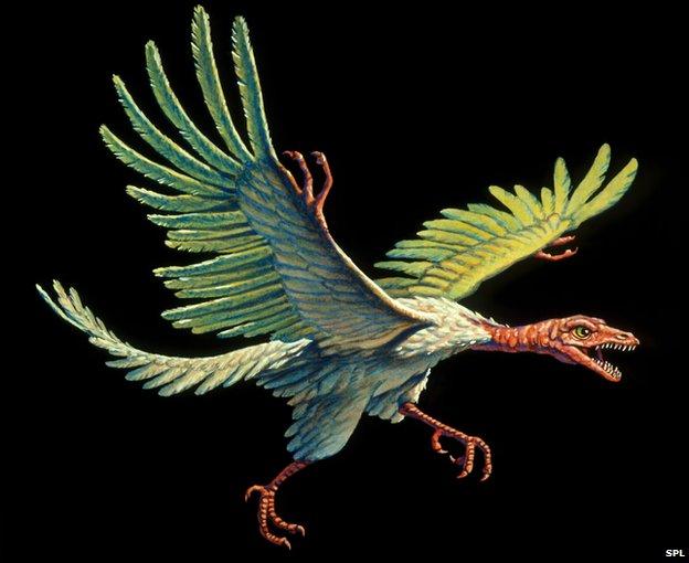 Archaeopteryx - Thuỷ tổ của loài chim.