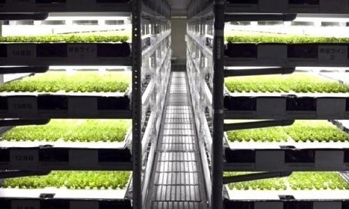 Các giá trồng rau hiện đại và tự động hóa.