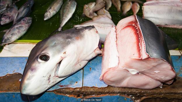 Chỉ cần quẫy đuôi nhẹ, loài cá mập bé nhỏ này có thể khiến nạn nhân xung quanh bị choáng tạm thời và buộc phải nằm im chịu trận.