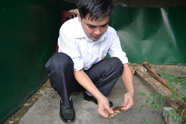 Rắn mối cũng được nuôi trong trang trại môi trường tự nhiên