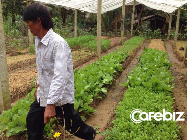 Ông Thống tại vườn rau hữu cơ tại gia đình ở xã Lộc Thuận, huyện Bình Đại, tỉnh Bến Tre.