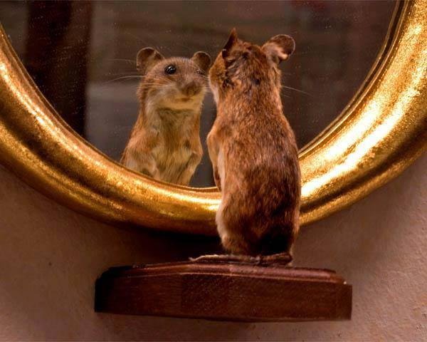 Để mô tả đơn giản, tự nhận thức giống như một chiếc gương không sạch cho lắm, bạn càng giỏi tự nhận thức, chiếc gương này sẽ càng trong và giúp bạn nhìn thấy mình rõ hơn.