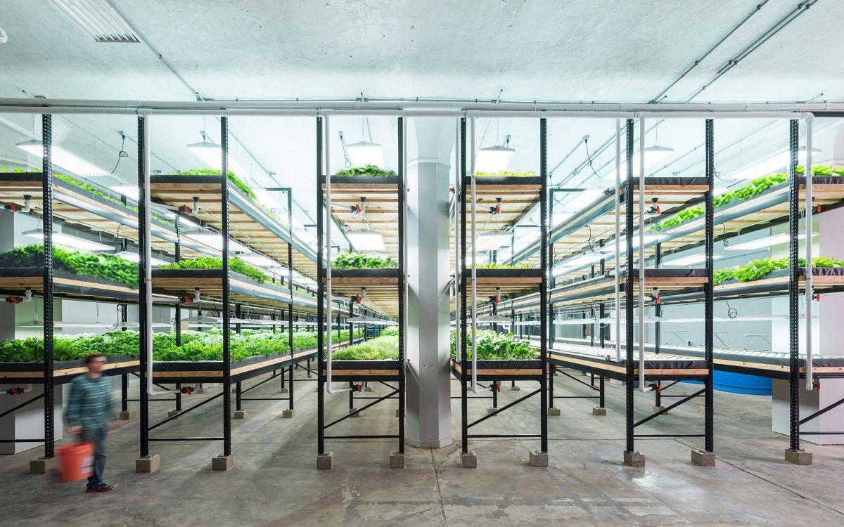 Liệu nông trại đô thị có thể trở thành 'anh hùng' giải cứu thế giới khỏi nạn đói trong tương lai?