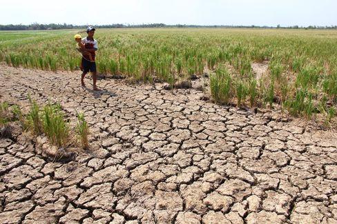 Đồng bằng sông Cửu Long đang hứng chịu đợt hạn hán tồi tệ