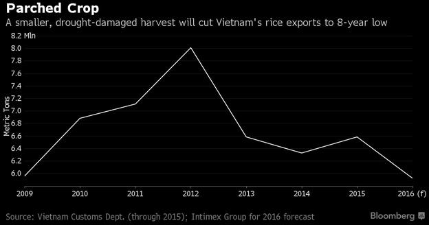 Sản lượng lúa gạo của Việt Nam năm 2016 có thể giảm xuống mức thấp nhất trong 8 năm