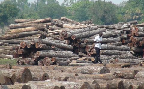 Khai thác gỗ ở Mozambique