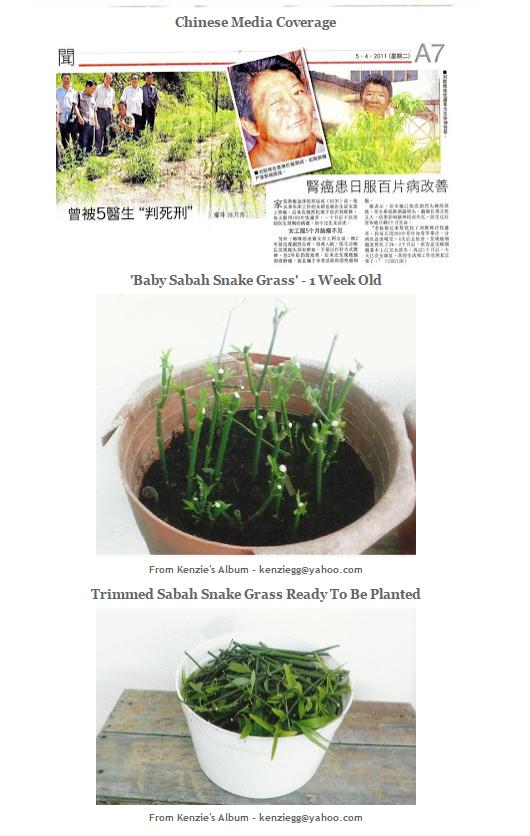 Hình ảnh chia sẻ của bệnh nhân trên blog về cây bìm bịp (Ảnh Internet)