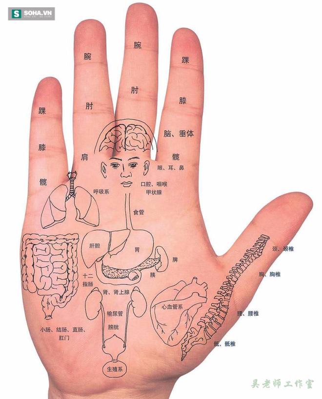 Những vị trí trên bàn tay đều có chức năng kết nối với các bộ phận nội tạng (Ảnh minh họa)