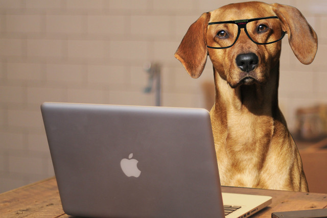 Loài chó thông minh hơn chúng ta tưởng
