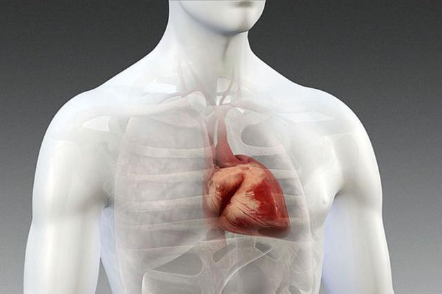 Càng ngồi nhiều, bạn càng có khả năng bị tắc nghẽn mạch máu trong tim