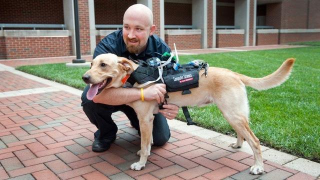 Chó được huấn luyện chuyên nghiệp để hỗ trợ cảnh sát