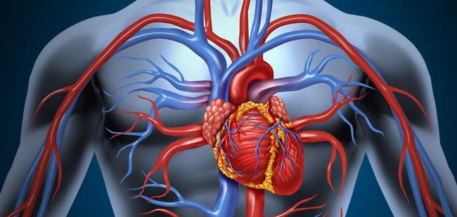 Đường là thủ phạm gây ra bệnh tim mạch vành