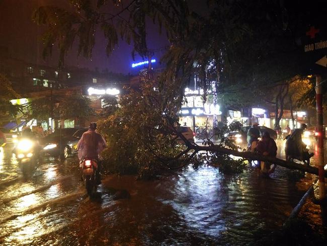 Khu vực chùa Láng có 1 cây xanh bị đổ chắn ngang đường. Ảnh: Facebook