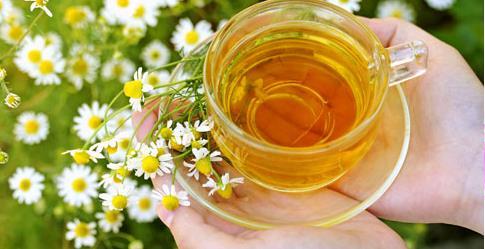 Cúc La Mã thường xuyên được sử dụng như một loại thảo dược, một loại trà không chứa chất caffeine, có tác dụng giúp người uống dễ đi vào giấc ngủ và làm giảm lo lắng nhờ các hợp chất tự nhiên có trong loài hoa này.