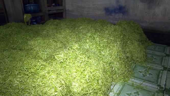 Rau muống sau khi bào, ngâm hóa chất đổ trên nền nhà, chờ đem đi tiêu thụ tại cơ sở bà Mỵ - Ảnh: Quỳnh Giang.