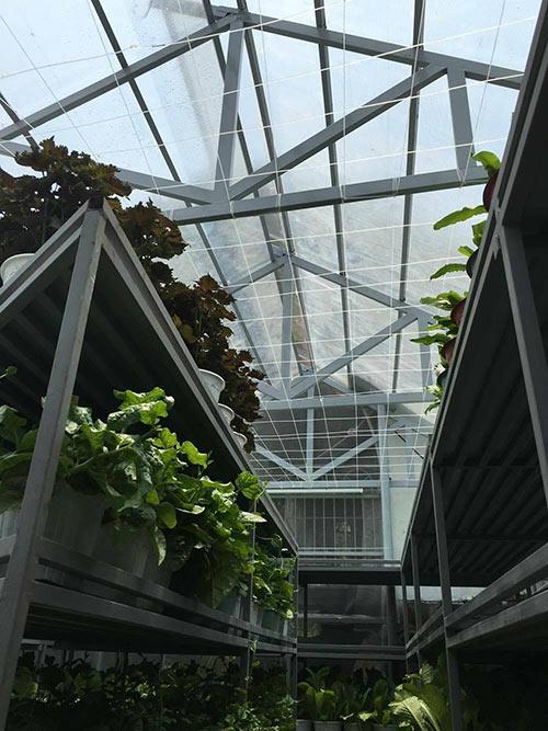 Vườn rau xanh được chị Nhung đầu tư 100 triệu để xây dựng.