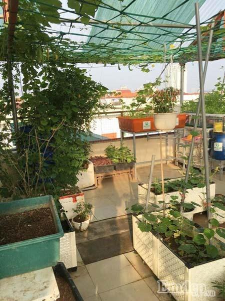 Một góc vườn xanh mát của gia đình chị Thu Hương