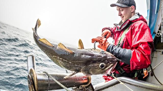 Một công nhân đánh bắt cá tuyết trên vùng biển Bering.
