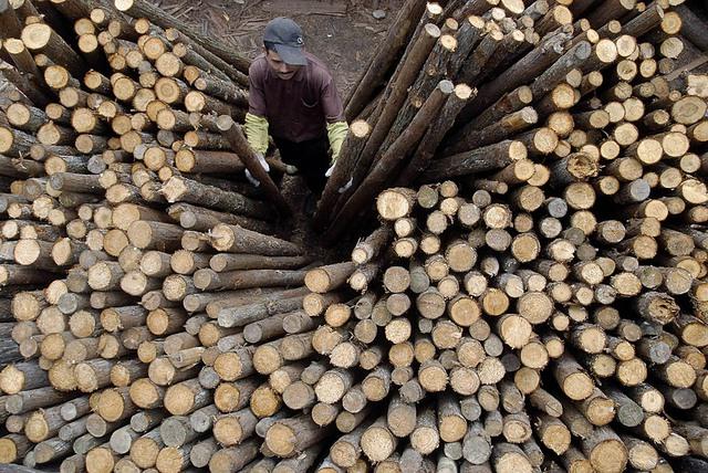 Khai thác gỗ ở Trung Quốc