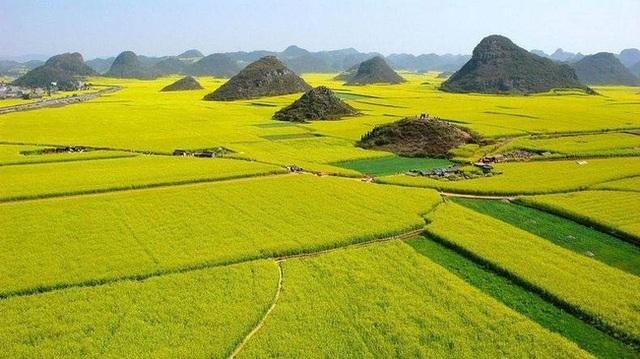 Những cánh đồng hoa cải mênh mông trên hành trình Tây Tạng...