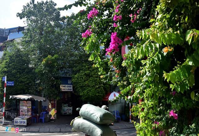 Hàng loạt biển báo giao thông bất hợp lý ở Sài Gòn 43