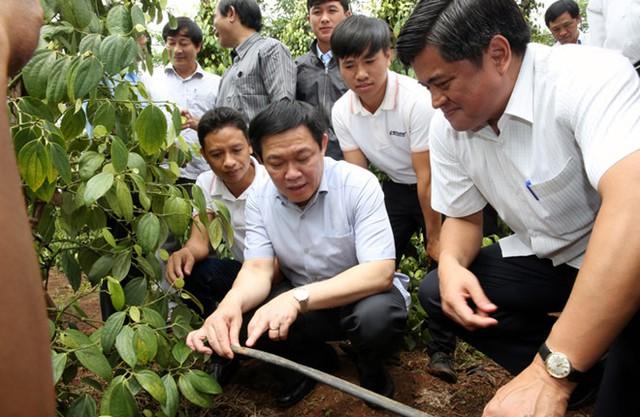 Hình ảnh Phó Thủ tướng luôn sát với thực tế công việc mỗi khi ông đi công tác địa phương - Phó Thủ tướng Vương Đình Huệ xem công nghệ tưới nước tiết kiệm vào gốc cây hồ tiêu tại Gia Lai