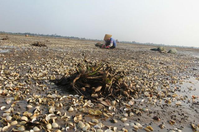 Việc hàng trăm sản lphaamr không đạt chất lượng được lưu thông trên thị trường không chỉ gây thiệt hại cho người nuôi trồng thủy sản, mà còn gây ô nhiễm môi trường và những hệ lụy về môi trường hàng chục, thậm chí hàng trăm năm sau. Ảnh minh họa.