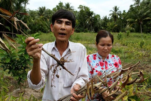 Vợ chồng ông Lê Văn Hoài bên vườn cây sầu riêng giống chết trụi, để lại khoản nợ 250 triệu đồng - Ảnh: V.Tr.