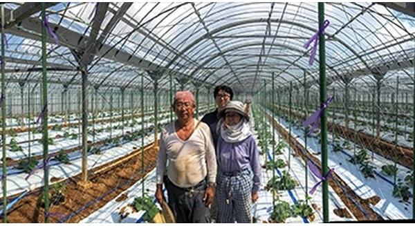 Sử dụng trí tuệ nhân tạo của Google, một nông trang dưa chuột tại Nhật Bản tự động hóa thành công