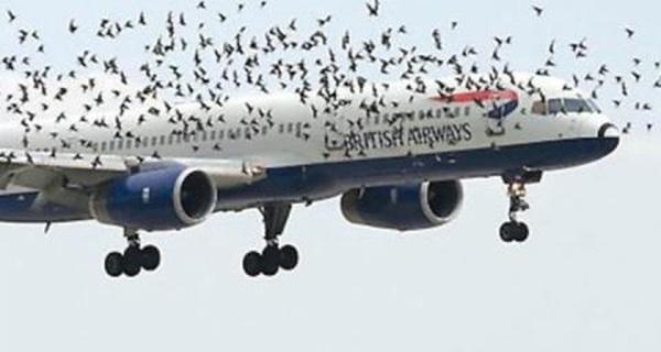 Cục hàng không đề xuất đầu tư 1.000 tỉ đồng cho dự án đuổi chim