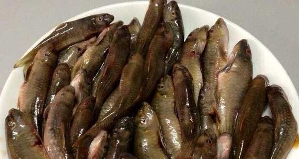 Cá rô, tép đồng miền Tây bay cả nghìn cây số ra Hà Nội