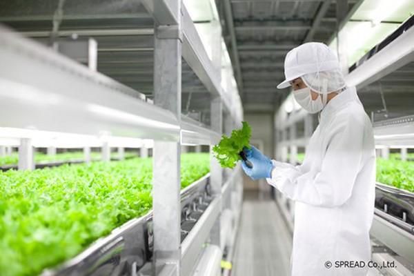 Công nghệ sản xuất rau sạch ở Nhật
