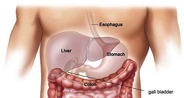 Bạn có bao giờ tò mò về tiếng 'ọp ọp' mỗi khi bụng rỗng chưa
