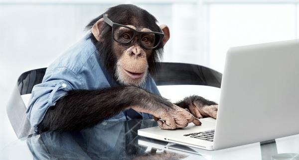Hiệu quả đầu tư của bạn có bằng một chú khỉ?