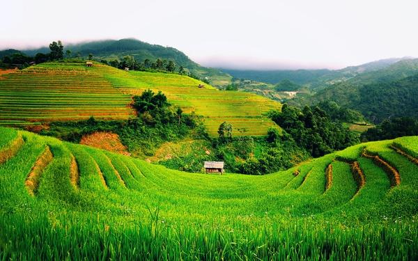 Đến Vingroup, Masan còn hứng thú, các startup Việt còn chờ đợi gì mà không tham gia làm nông nghiệp ngay lúc này