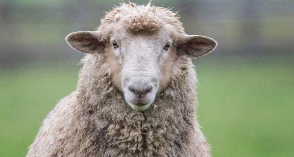 Đừng sống như những chú cừu, cam chịu và làm theo lệnh của người khác, bạn sẽ chẳng bao giờ thành công được đâu