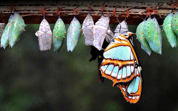 """C&rgb(2, 2, 6);u truyện """"ch&rgb(2, 5, 0); b&rgb(2, 3, 3); v&rgb(2, 2, 4); con bướm trong vỏ k&rgb(2, 3, 3);n"""" của người Do Th&rgb(2, 2, 5);i dạy ch&rgb(2, 5, 0);ng ta b&rgb(2, 2, 4);i học về việc đối mặt với nghịch cảnh"""