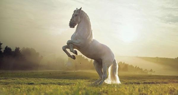Tuổi trẻ như một chú ngựa, không chịu chạy không rèn luyện thì mãi chỉ là ngựa thường chẳng bao giờ trở thành chiến mã