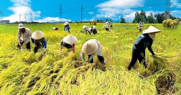 """""""Giải phẫu"""" cho toàn ngành nông nghiệp Việt Nam"""