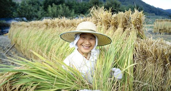 Việt Nam học được gì từ thành công mở rộng hạn điền Nhật Bản đã đạt được?