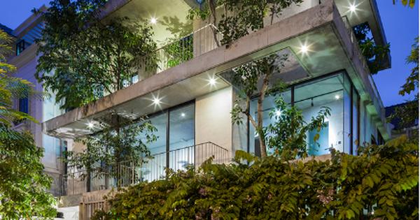 Báo Mỹ ngỡ ngàng với ngôi nhà tràn ngập cây xanh tuyệt đẹp giữa lòng Sài Gòn - ảnh 1