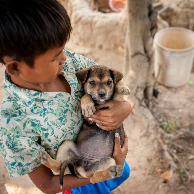 Với mức sống 463 USD/tháng, chó con là thứ mà bất kì đứa trẻ nào ở Campuchia đều mong muốn sở hữu.