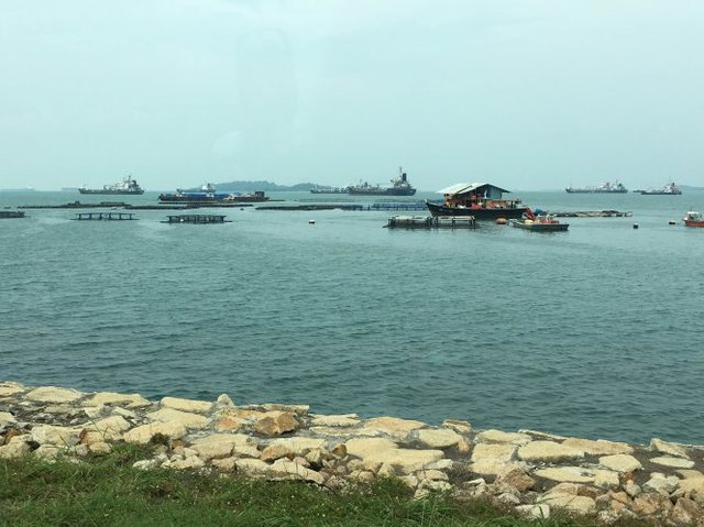 Bè cá quanh đảo rác Semakau - Ảnh: LÊ NAM