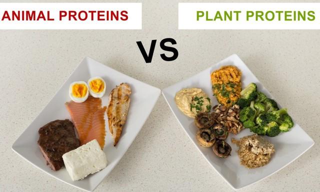 Protein là hợp chất hữu cơ có chứa Nitơ, bao gồm các chuỗi dài axit amin tạo thành những phân tử lớn. Những hợp chất này vô cùng thiết yếu cho các hoạt động hằng ngày của mọi sinh vật sống dù lớn hay nhỏ trên Trái đất.