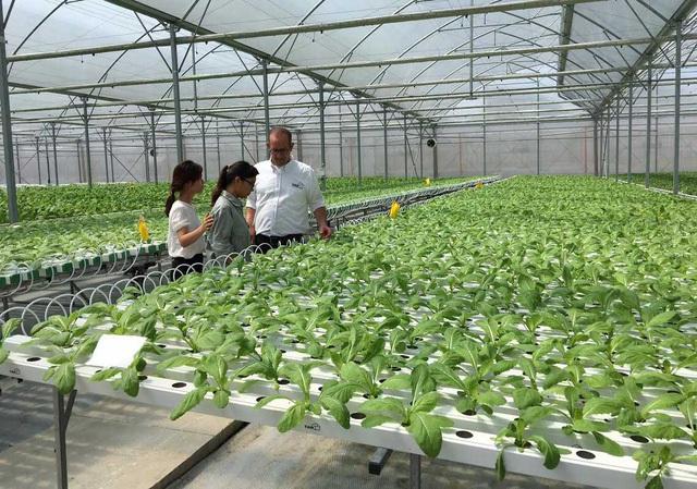 Theo các chuyên gia, để bền vững và cạnh tranh được với nông sản các nước khác