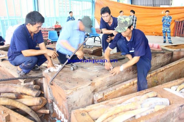 Số ngà voi đầu tiên lộ ra khi nắp khối gỗ được mở ra. Ảnh: T.H