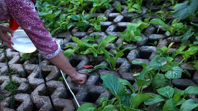 Mỗi ô vuông to chừng một nắm tay, vừa vặn trồng được 1 cây rau