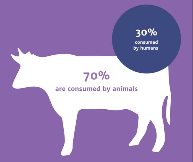 Hơn 70% thuốc kháng sinh sử dụng trên người tại Mỹ được bán cho nhu cầu sử dụng ở động vật