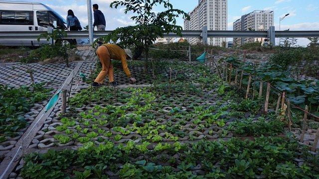 Cô Hương, nhà ở ngõ 462 đường Bưởi tự hào: Vườn nhà tôi trồng nhiều loại rau nhất, 17 loại. Mấy tháng nay tôi không phải mua rau
